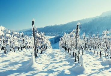 Ледяной виноградник
