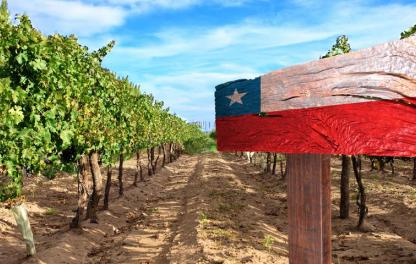 виноградники Чили