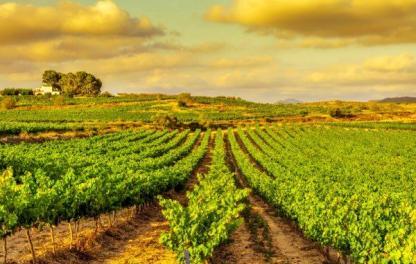 Риоха - винодельческая зона