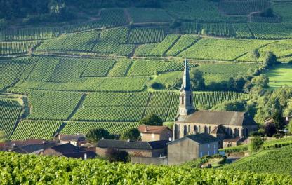 Классификация бургундских вин